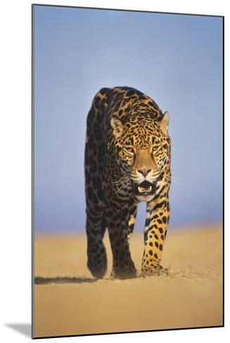 Jaguar-DLILLC-Mounted Photographic Print