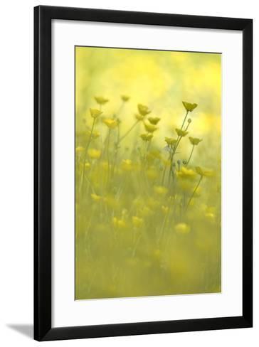 Early Morning Meadow-Kathleen Clemons-Framed Art Print