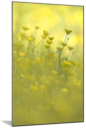 Early Morning Meadow-Kathleen Clemons-Mounted Photographic Print