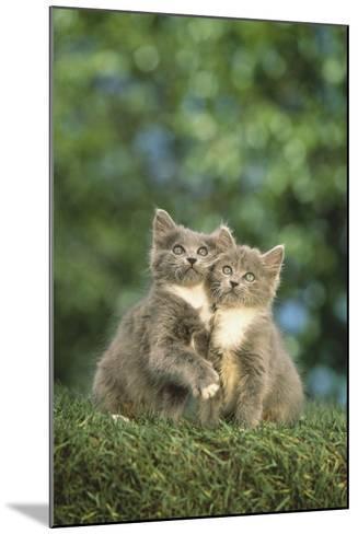 Gray Kittens-DLILLC-Mounted Photographic Print