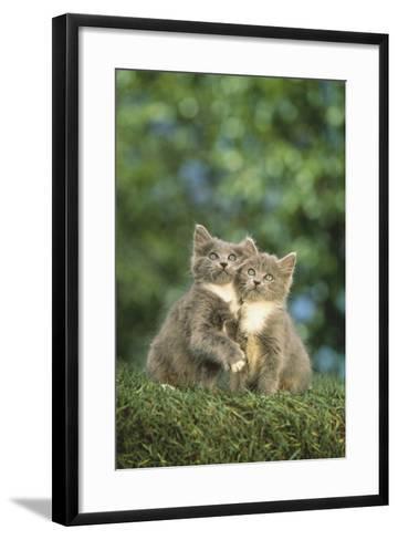 Gray Kittens-DLILLC-Framed Art Print