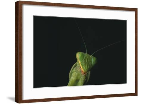 Praying Mantis-DLILLC-Framed Art Print