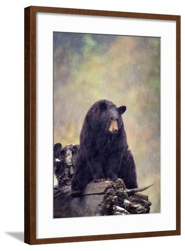 Black Bear-DLILLC-Framed Art Print