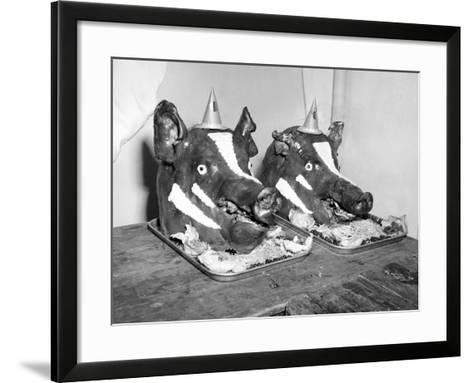 Two Well Decorated Roasted Pigs Heads in Australia, Ca. 1955.-Kirn Vintage Stock-Framed Art Print