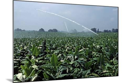 Watering of Tobacco Plantation, Lexington, Kentucky, Usa, August 1984-Alain Le Garsmeur-Mounted Photographic Print