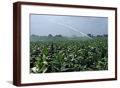 Watering of Tobacco Plantation, Lexington, Kentucky, Usa, August 1984-Alain Le Garsmeur-Framed Art Print