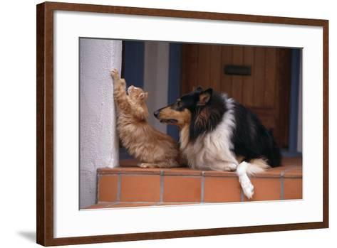 Collie Watching Cat Scratch Wall-DLILLC-Framed Art Print