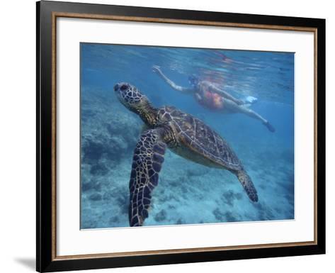 Green Sea Turtle Swimming in Shallow Water-DLILLC-Framed Art Print