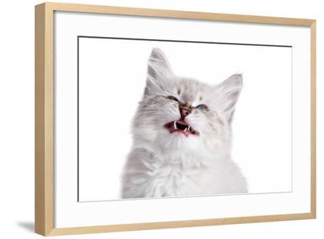 Siberian Cat-Fabio Petroni-Framed Art Print