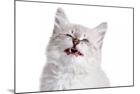 Siberian Cat-Fabio Petroni-Mounted Photographic Print