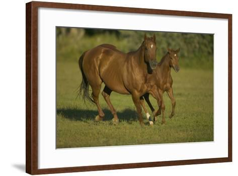 Galloping Brown Mare and Filly-DLILLC-Framed Art Print
