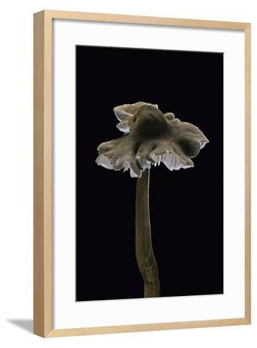 Xerula Pudens-Paul Starosta-Framed Art Print