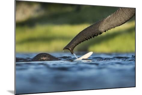 African Elephants in Chobe River, Chobe National Park, Botswana-Paul Souders-Mounted Photographic Print