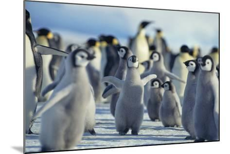Penguin Chicks Stretching Wings-DLILLC-Mounted Photographic Print