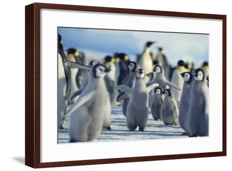 Penguin Chicks Stretching Wings-DLILLC-Framed Art Print