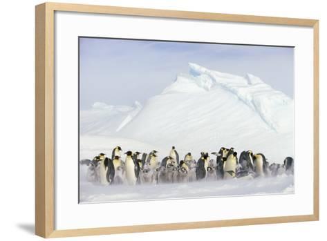Penguins in Blowing Snow-DLILLC-Framed Art Print