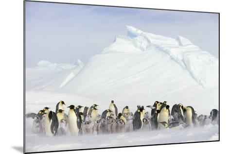 Penguins in Blowing Snow-DLILLC-Mounted Photographic Print