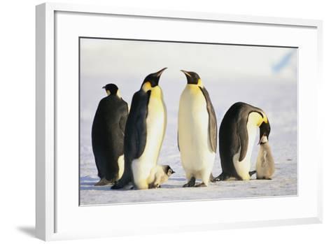 Group of Penguins-DLILLC-Framed Art Print