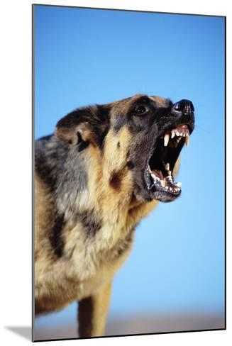 German Shepherd Barking-DLILLC-Mounted Photographic Print