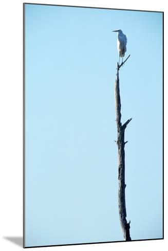 White Egret on Tall Snag-Paul Souders-Mounted Photographic Print