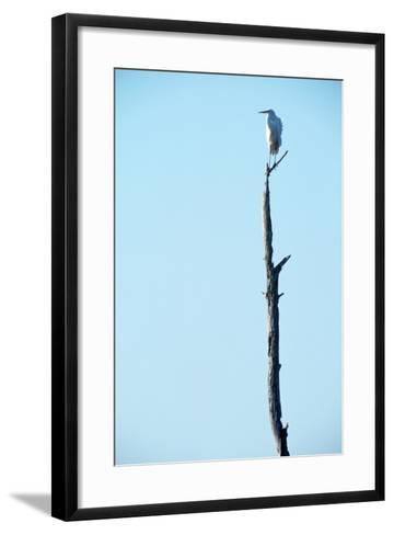 White Egret on Tall Snag-Paul Souders-Framed Art Print