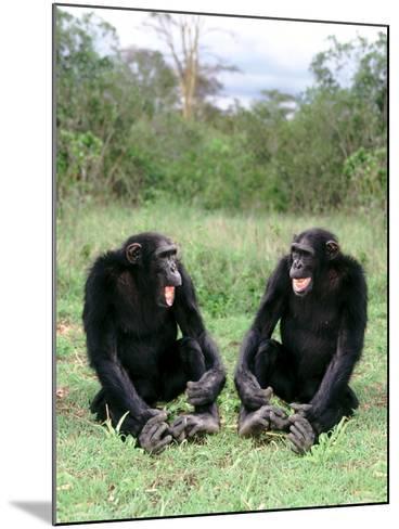 Chimps Socializing-DLILLC-Mounted Photographic Print