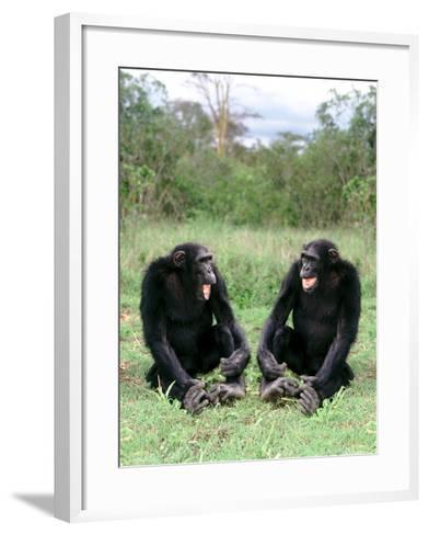 Chimps Socializing-DLILLC-Framed Art Print