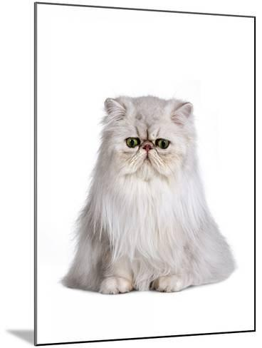 Persian Cat-Fabio Petroni-Mounted Photographic Print