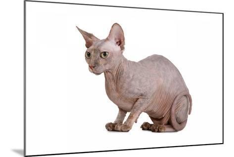 Sphinx Cat-Fabio Petroni-Mounted Photographic Print