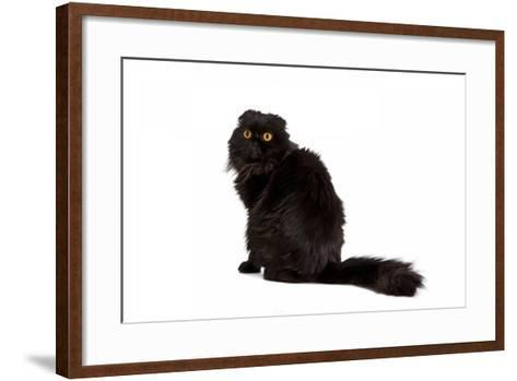 Highland Folt Cat-Fabio Petroni-Framed Art Print