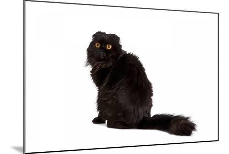 Highland Folt Cat-Fabio Petroni-Mounted Photographic Print