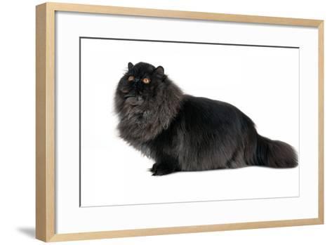 Persian Cat-Fabio Petroni-Framed Art Print
