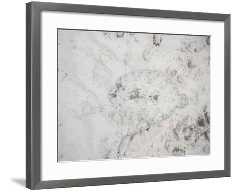 Camouflaged Fish-DLILLC-Framed Art Print