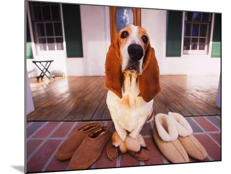 Basset Hound Waiting on Porch in Slippers-DLILLC-Mounted Photographic Print