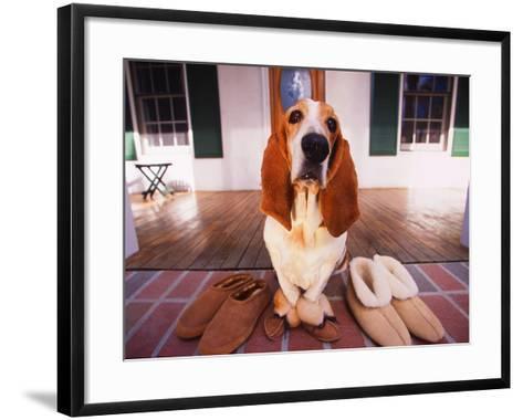 Basset Hound Waiting on Porch in Slippers-DLILLC-Framed Art Print