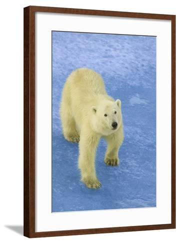 Polar Bear Looking Up-DLILLC-Framed Art Print