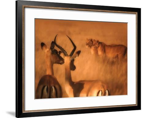 Impalas and Lionesses-DLILLC-Framed Art Print