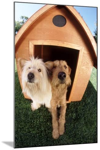 Dogs Sharing a House-DLILLC-Mounted Photographic Print