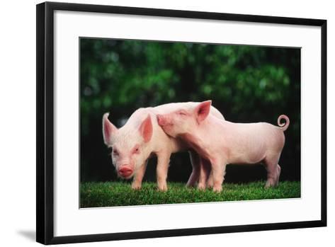Two Affectionate Piglets-DLILLC-Framed Art Print