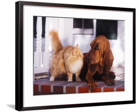 Dog Raising Eyebrow at Cat-DLILLC-Framed Art Print