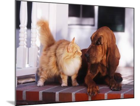 Dog Raising Eyebrow at Cat-DLILLC-Mounted Photographic Print