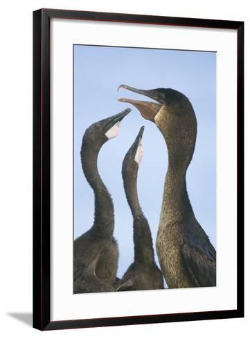 Cormorant Feeding Young-DLILLC-Framed Art Print