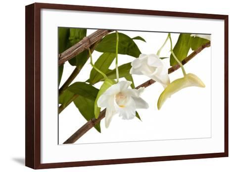 Dendrobium Arcuatum-Fabio Petroni-Framed Art Print