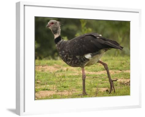Southern Screamer-Joe McDonald-Framed Art Print