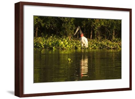 Jabiru Stork-Joe McDonald-Framed Art Print