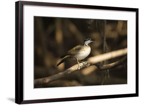 Sungrebe-Joe McDonald-Framed Art Print
