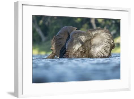 African Elephant in Chobe River, Chobe National Park, Botswana-Paul Souders-Framed Art Print