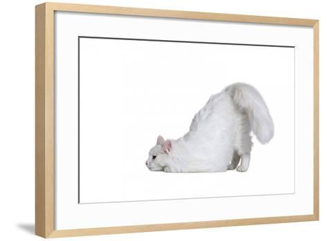 Turkish Angora Cat-Fabio Petroni-Framed Art Print