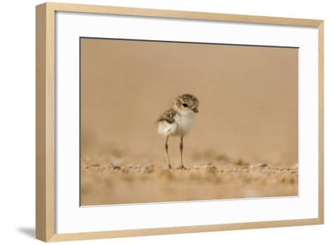 Collared Plover-Joe McDonald-Framed Art Print