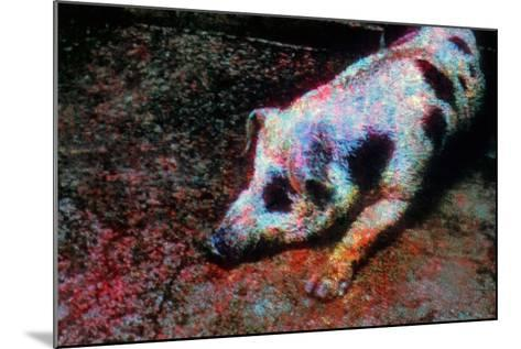 Pig-Andr? Burian-Mounted Photographic Print